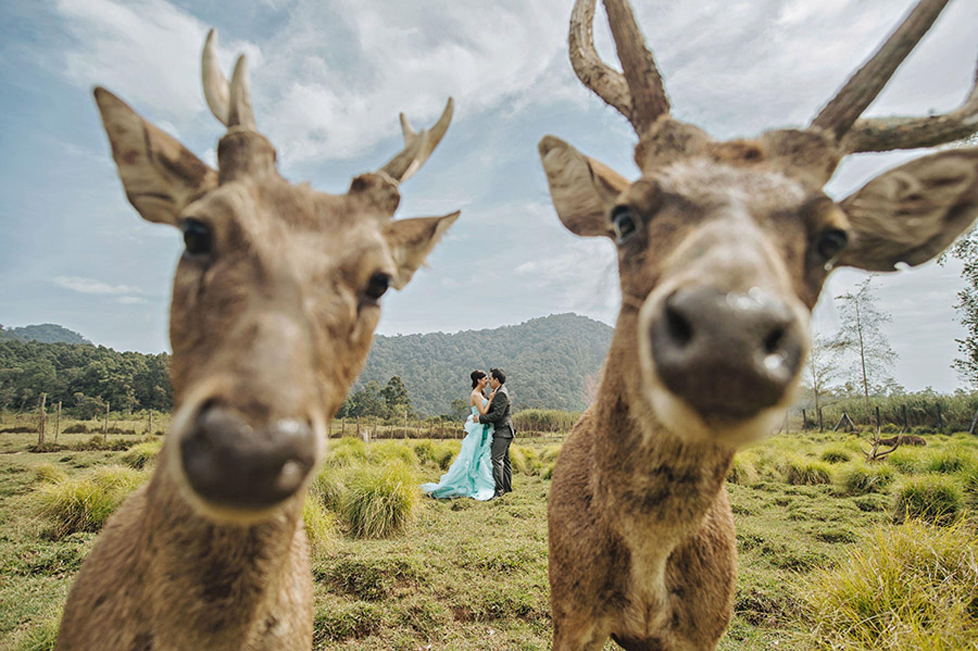 8 Hilariously Odd Wedding Photos