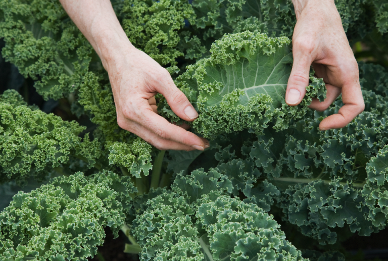 7 All-Natural Foods That Can Totally F*ck You Up