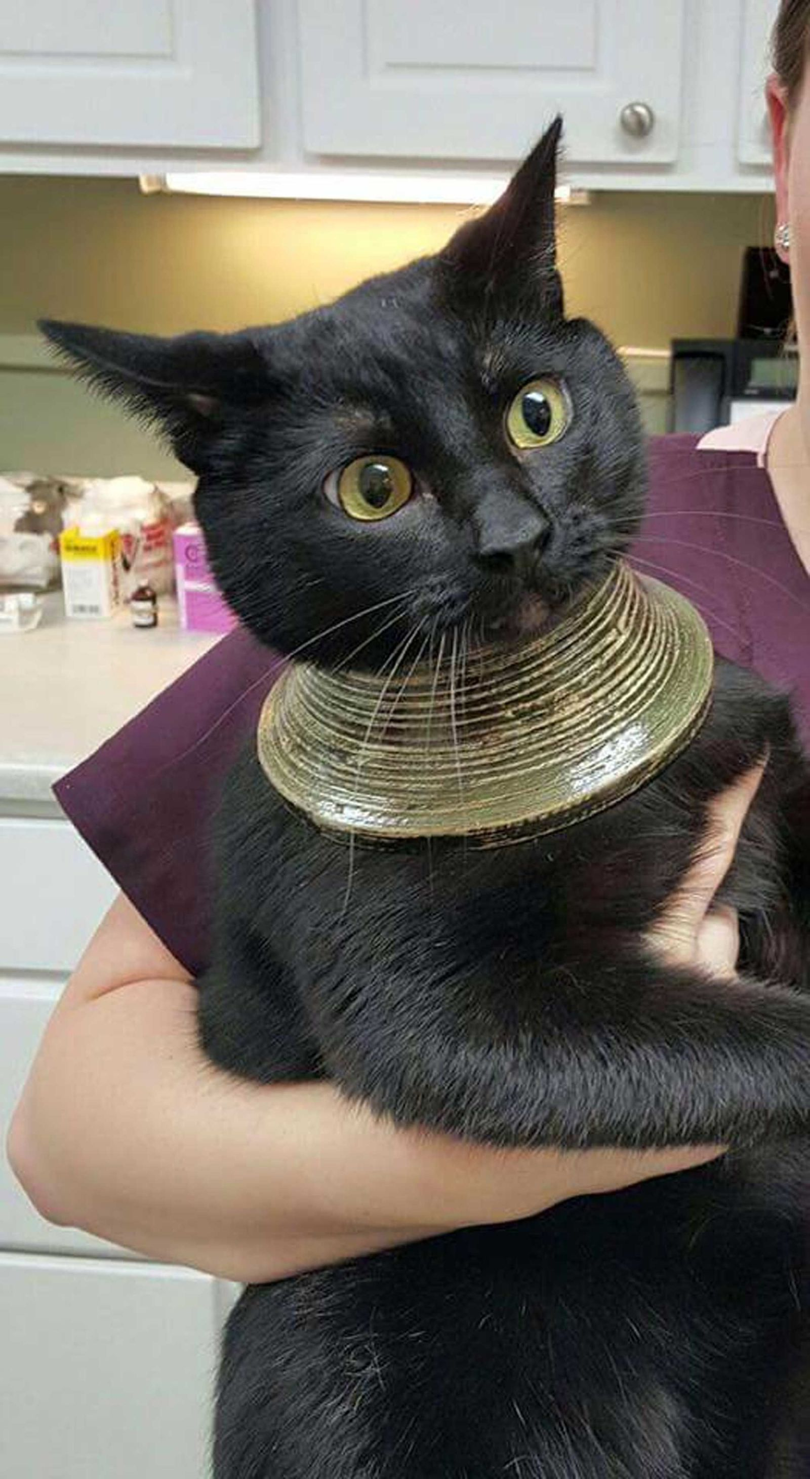 This Cat Accidentally Wearing a Necklace Is the Best Thing You'll See All Day
