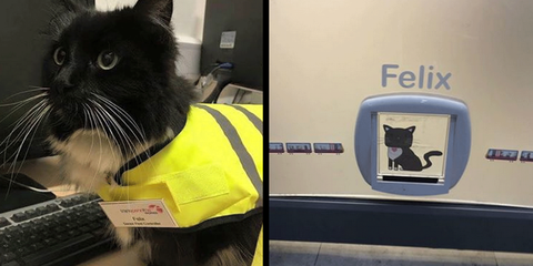 Train Station Cat Gets Adorably Promoted to Senior Pest Controller