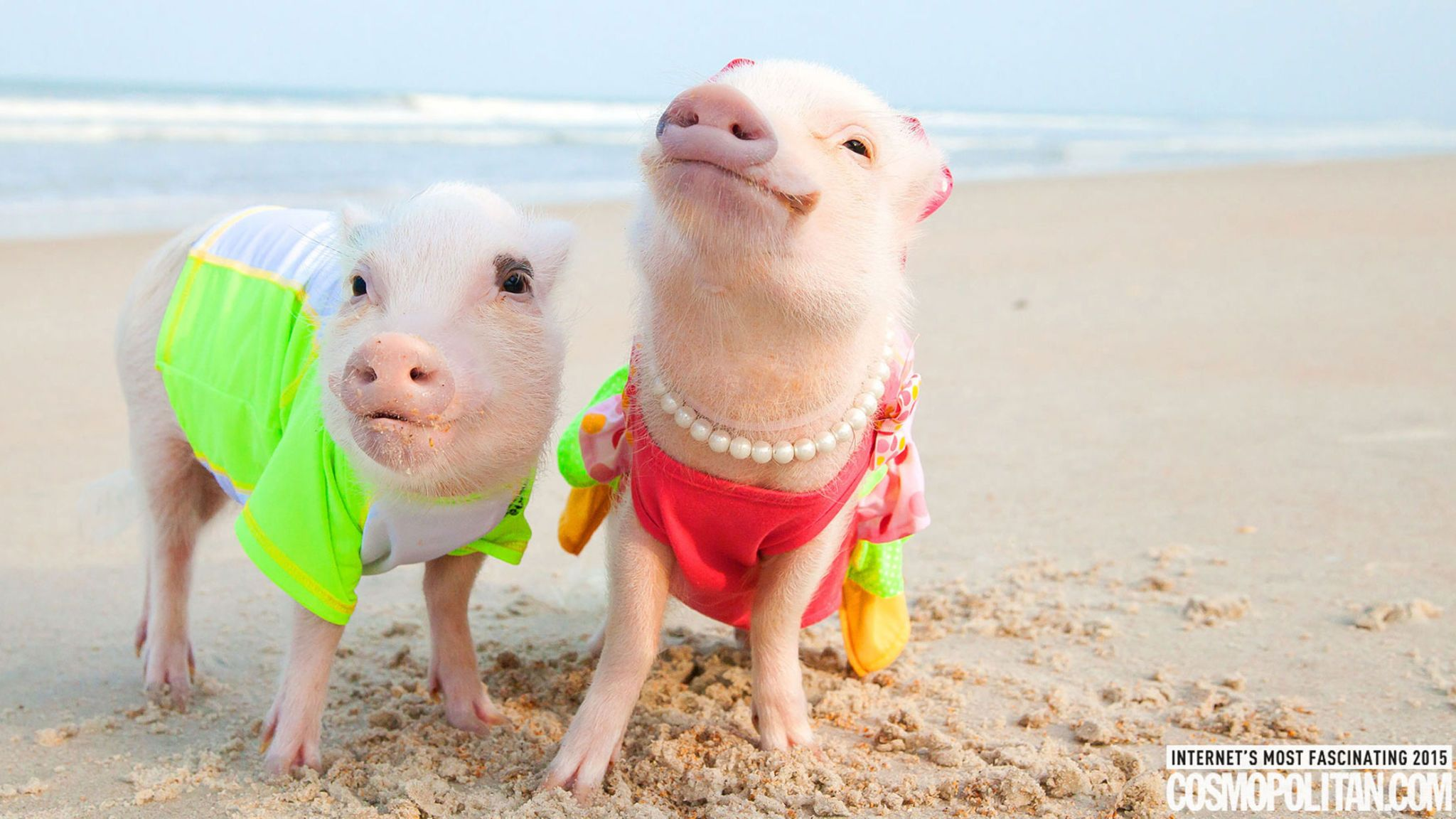 This Impossibly Glamorous Pig Pair Is Famous AF — a Superfan Explains Why