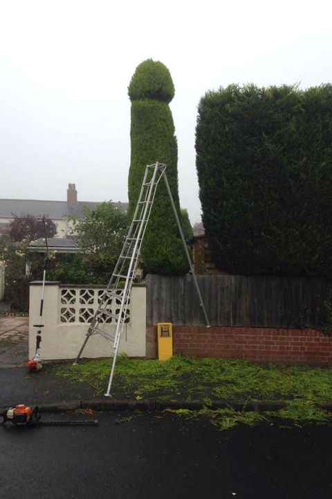 Shrub, Road surface, Ladder, Pole, Hedge, Tar, Environmental art,