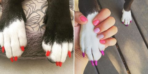 Pink, Toe, Nail, Carmine, Foot, Fur, Paw, Nail polish, Nail care, Claw,
