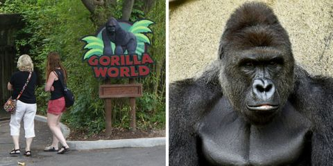 Gorilla World at Cincinnati Zoo, Harambe