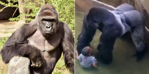 breaking mother of kid who fell into harambe s enclosure will not