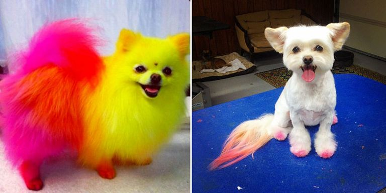 12 Things I Wish I Knew Before I Became A Dog Groomer-2142