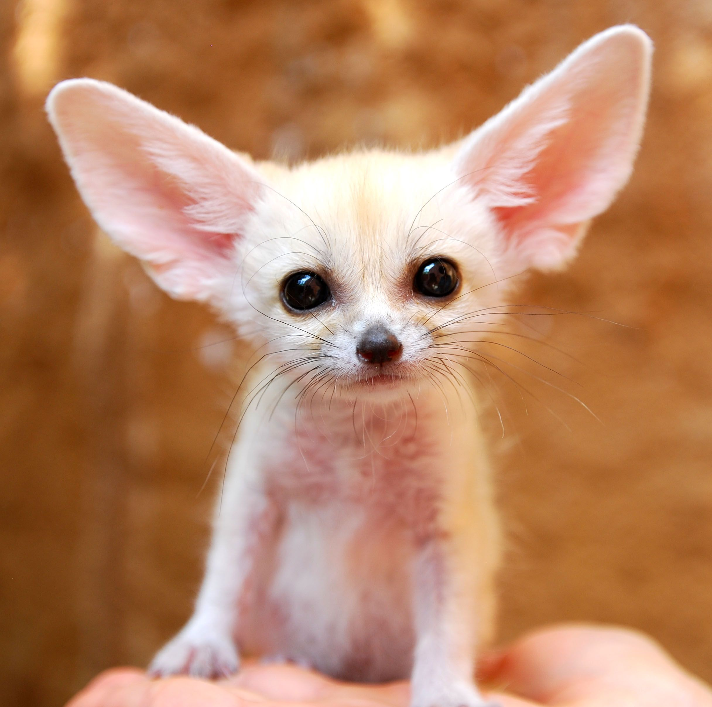 45 teeny baby animals you u0027ll want to put in your pocket