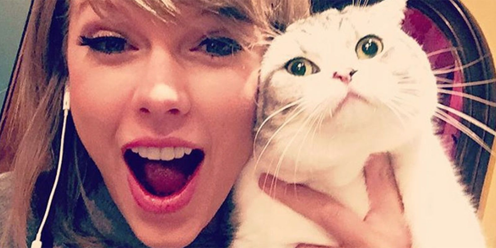 Taylor Swift S Cat Looks So Cute Prepping For The Reputation Tour Choreography