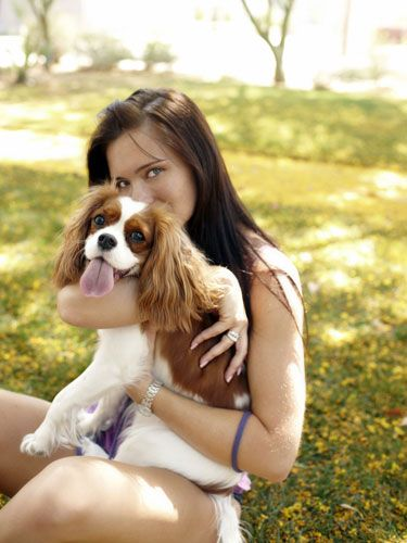 Carnivore, Dog, Dog breed, Mammal, People in nature, Sunlight, Liver, Companion dog, Spaniel, Long hair,