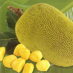 <p>Growing in Brazil this large fruit can grow up to two feet and sixty pounds! When eaten helps provide iron and is rich in Vitamin A, which helps skin as well as eyesight. Try a jackfruit facial mask with jackfruit leaves that will leave skin soft and clean. </p>