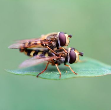 "<p>You think <a href=""http://www.cosmopolitan.com/sex-love/tips-moves/sex-noises"" target=""_blank"">your moans</a> are bad? When houseflies get it on, their wings produce a buzzing sound loud enough for predators to find them. German researchers followed 9,000 houseflies over four years and noticed that 26 percent of copulating flies were attacked by bats—and more than half of these were eaten.</p>