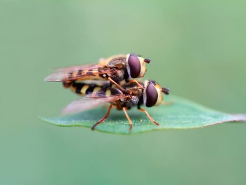 """<p>You think <a href=""""http://www.cosmopolitan.com/sex-love/tips-moves/sex-noises"""" target=""""_blank"""">your moans</a> are bad? When houseflies get it on, their wings produce a buzzing sound loud enough for predators to find them. German researchers followed 9,000 houseflies over four years and noticed that 26 percent of copulating flies were attacked by bats—and more than half of these were eaten.</p> <p>Lesson Learned: Avoid flaunting your love soundtrack when surrounded by predators...or, uh, parents or ex-boyfriends.</p>"""