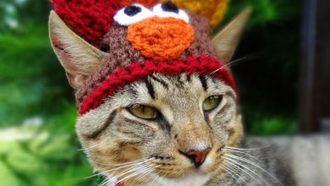 Whiskers, Cat, Costume accessory, Felidae, Snout, Fur, Terrestrial animal, Close-up, Small to medium-sized cats, Coquelicot,