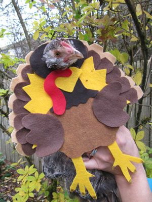 14 Cats Dressed As Thanksgiving