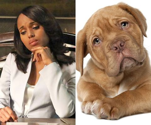 Olivia pope puppy faces scandal olivia pope sad face abcthinkstockphoto voltagebd Gallery