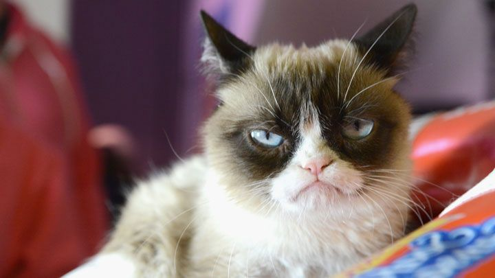 Aubrey plaza to voice grumpy cat in lifetime movie people often assume that grumpy cat is a boy cat because people are generally the worst makes grumpy cat face come november when the world finally sees thecheapjerseys Gallery