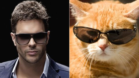 Cats + Bachelors = Catchelors