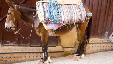 Working animal, Halter, Pack animal, Liver, Fawn, Horse supplies, Foot, Leash, Rein, Livestock,