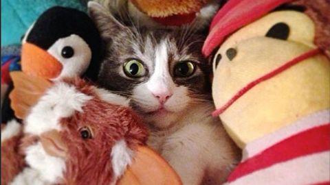 Vertebrate, Small to medium-sized cats, Whiskers, Cat, Felidae, Stuffed toy, Orange, Carnivore, Peach, Plush,