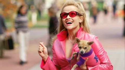 Eyewear, Vision care, Glasses, Dog breed, Carnivore, Dog, Mammal, Dog supply, Sunglasses, Toy dog,