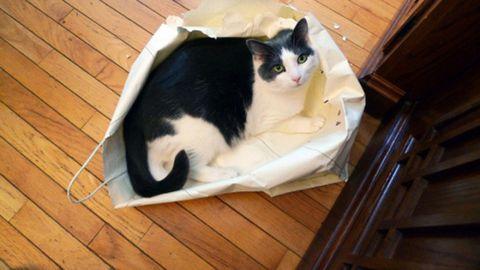 Wood, Felidae, Small to medium-sized cats, Vertebrate, Cat, Carnivore, Hardwood, Mammal, Whiskers, Wood stain,
