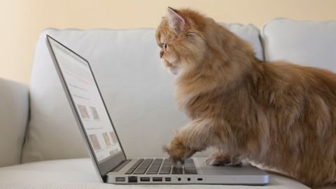 Product, Electronic device, Vertebrate, Technology, Felidae, Laptop part, Office equipment, Whiskers, Computer hardware, Small to medium-sized cats,