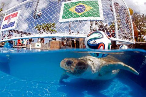 Vertebrate, World, Aqua, Ball, Marine mammal, Soccer ball, Ball, Marine biology, Football, Sphere,