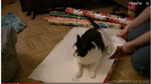 image - How To Wrap A Cat For Christmas