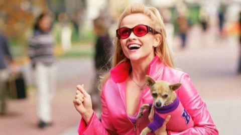 Eyewear, Vision care, Dog breed, Glasses, Carnivore, Dog, Sunglasses, Happy, Mammal, Facial expression,