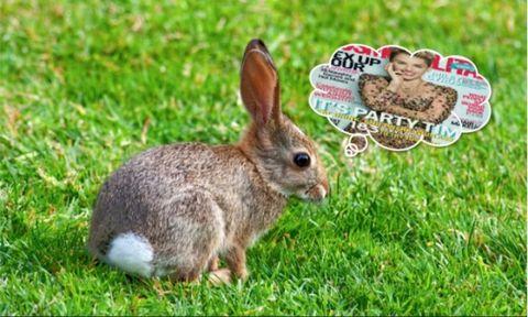 Rabbit, Grass, Organism, Skin, Green, Mountain Cottontail, Rabbits and Hares, Domestic rabbit, Lower Keys Marsh Rabbit, Adaptation,