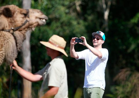 No-one has EVER been as excited to see a camel as Justin Timberlake