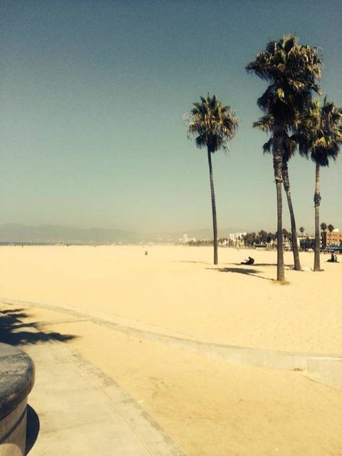 palm trees on Venice Beach in Los Angeles