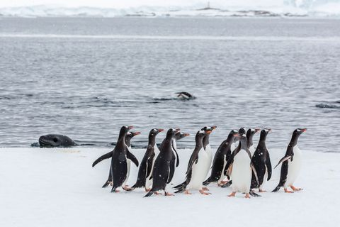 Antarctic post office job could be for YOU if love penguins and hate showers
