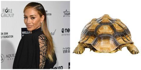 Nicole Sherzinger with a tortoise