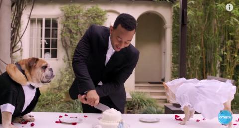 John Legend officiates a dog wedding