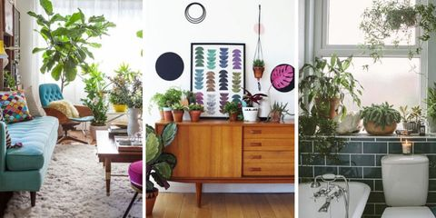 16 Indoor House Plant Ideas To Make Your Home Look Lovely