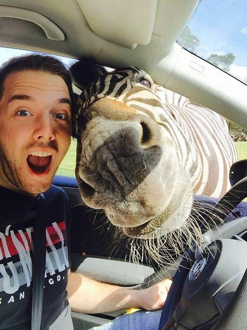 Man takes a selfie with a zebra