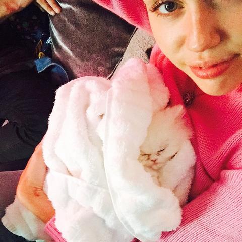 Miley Cyrus' new kitten