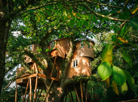 Treetops House, Devon