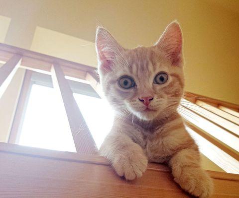 A crazy cat