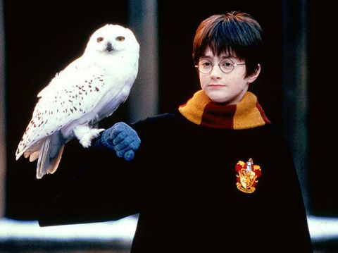 This fan theory about why Hedwig had to die in Harry Potter