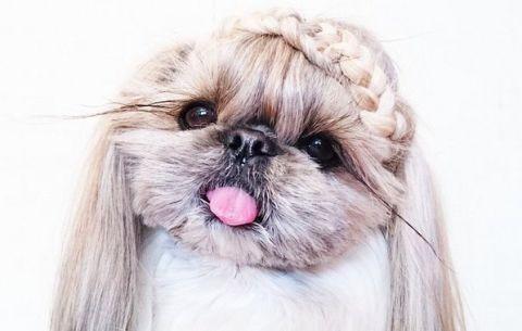The best tressed dog on Instagram