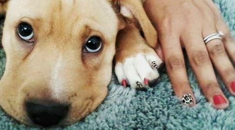 Doggy Manicures Are Trending