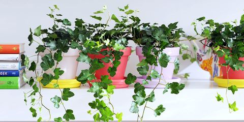 The 8 House Plants That Could Improve Your Night S Sleep
