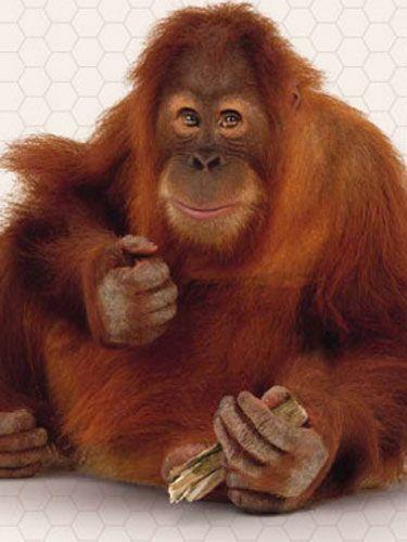 Organism, Finger, Lip, Cheek, Skin, Vertebrate, Primate, Forehead, Orangutan, Terrestrial animal,