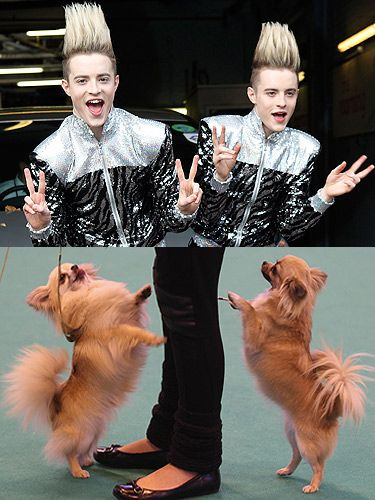 This well-groomed twosome are known for their bouncy behaviour, their ability to get under anyone's feet and their well-styled hair. And the puppies are exactly the same!