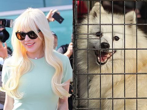 Lindsay Lohan and this cheeky canine are both beautiful, are both petite, are both platinum blondes and, of course, are both (occasionally) found locked up. LiLo, meet your animal soulmate!