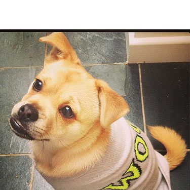 """<p><strong>Who?</strong> Fashion Assistant Holly's adorable Walter: """"He is fab because he's half pug half pomeranian, and when he runs he looks like a piglet.""""</p><p><strong>Loves:</strong> He likes to eat EVERYTHING, including sleeves. He also has an incredible underbite. Check out the trendy outfit too!</p>"""
