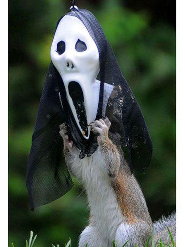 Squirrels Wearing Halloween Masks Photos Of Squirrels In