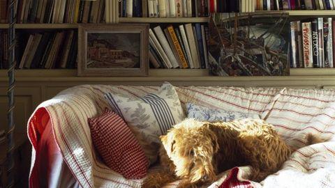 Shelf, Dog, Room, Dog breed, Shelving, Interior design, Carnivore, Publication, Bookcase, Sporting Group,
